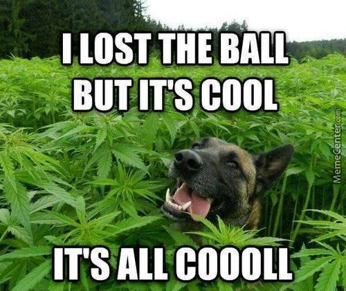 Cannabis Dog - Discount Cannabis Seeds
