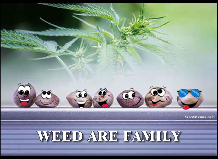 Cannabis Family - Discount Cannabis Seeds