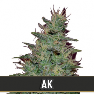 AK Automatic - Discount Cannabis Seeds