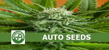 Auto Cannabis Seeds - Discount Cannabis Seeds
