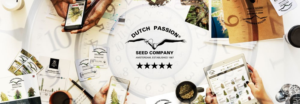 Buy Dutch Passion Seeds from Discount Cannabis Seeds