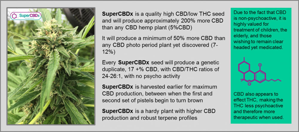 Super CBDx Seeds - High CBD Cannabis Seeds