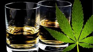 Alcohol v Cannabis | Discount Cannabis Seeds
