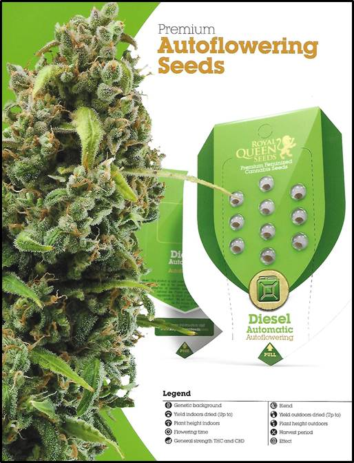 Buy Cheap Euphoria Cannabis Seeds at Discount Cannabis Seeds