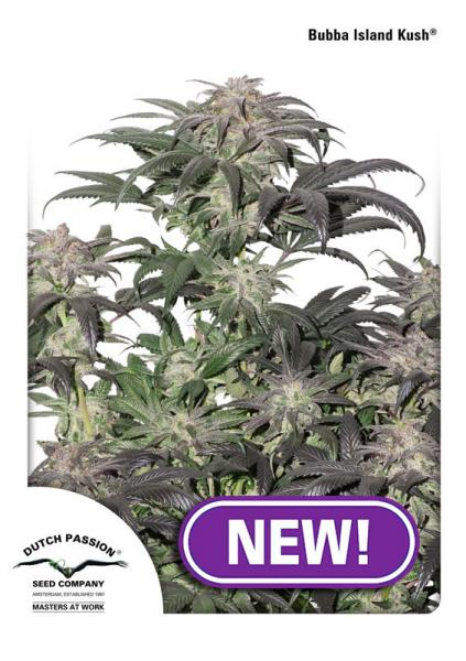 Dutch Passion - Discount Cannabis Seeds
