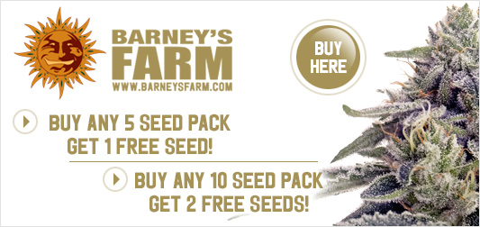 Barney's Farm | Discount Cannabis Seeds
