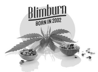 Blimburn Seeds - Discount Cannabis Seeds