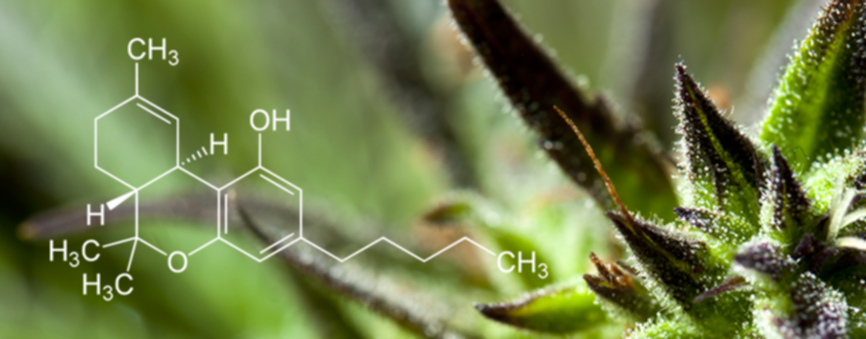 Medical Cannabis Seeds - Discount Cannabis Seeds