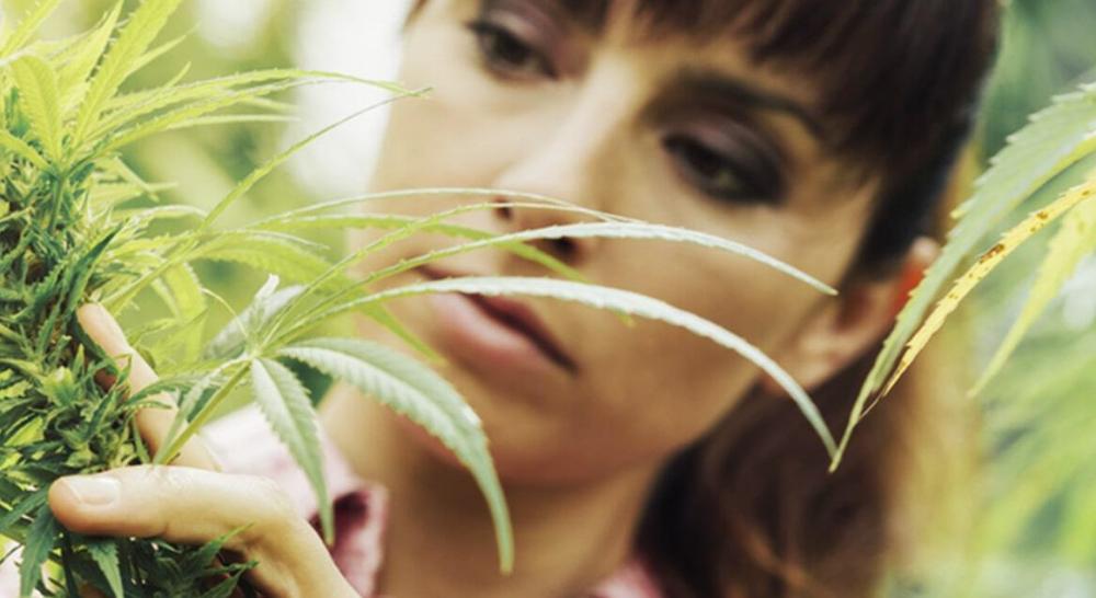 Cannabis Seeds - Discount Cannabis Seeds