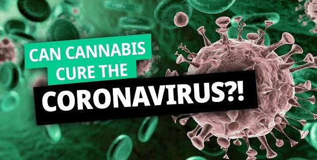 Cannabis and Coronavirus - Discount Cannabis Seeds