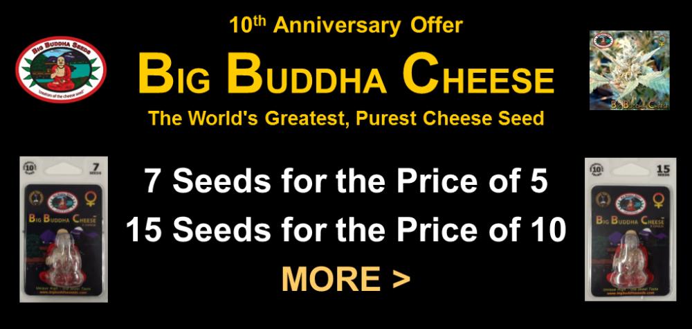 Big buddha seeds coupon