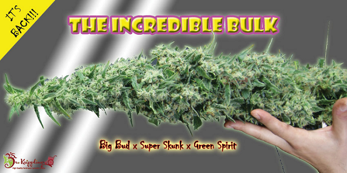 Dr Krippling Incredible Bulk Review | Discount Cannabis Seeds