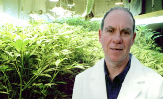 Ed Rosenthal | Discount Cannabis Seeds