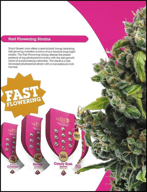 Buy Euphoria Cannabis Seeds at Discount Cannabis Seeds