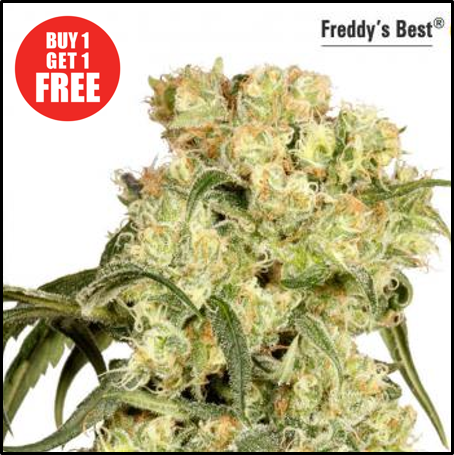Buy Freddy's Best - Discount Cannabis Seeds