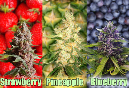 A - Z of Fruity Cannabis Seeds | Discount Cannabis Seeds