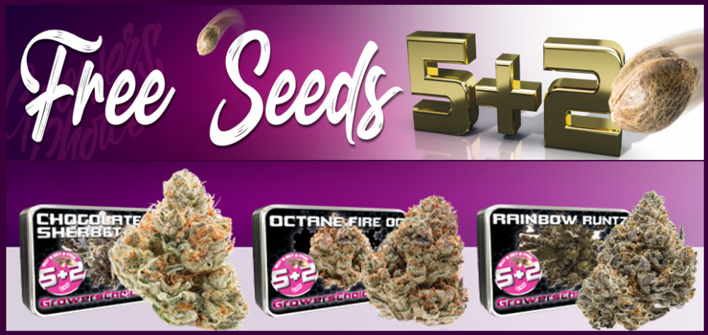 Growers Choice New Strains - Discount Cannabis Seeds