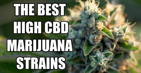 High CBD Cannabis Seeds - Discount Cannabis Seeds