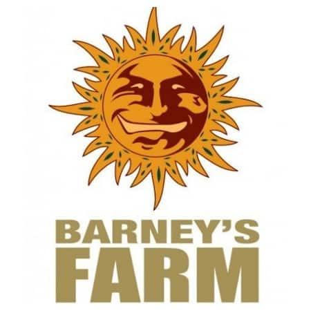 Cannabis Seeds Review - Barneys Farm - Discount Cannabis Seeds