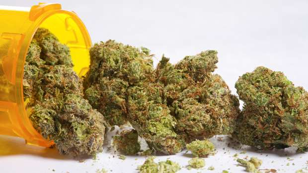 The Best Cannabis Seeds for the elite grower - Discount Cannabis Seeds.