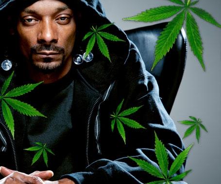 Cannabis Seeds Snoop Dogg's Favourite - Discount Cannabis Seeds.