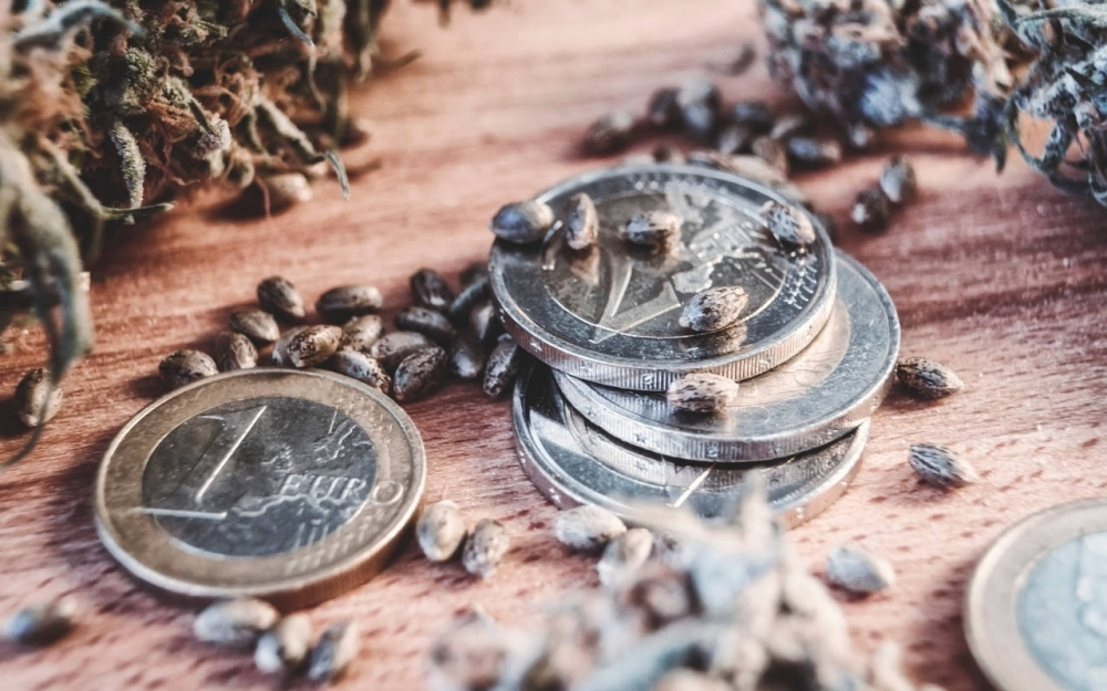 Cannabis Seeds The Best Money Can Buy - Discount Cannabis Seeds.