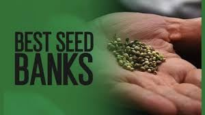 Cannabis Seeds Best Seeds of the Year 2021