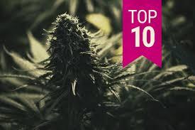 Cannabis Seeds Top 10 Feminised Strains - Discount Cannabis Seeds.