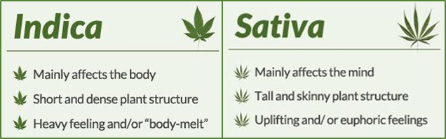Indica and Sativa Strains | Discount Cannabis Seeds
