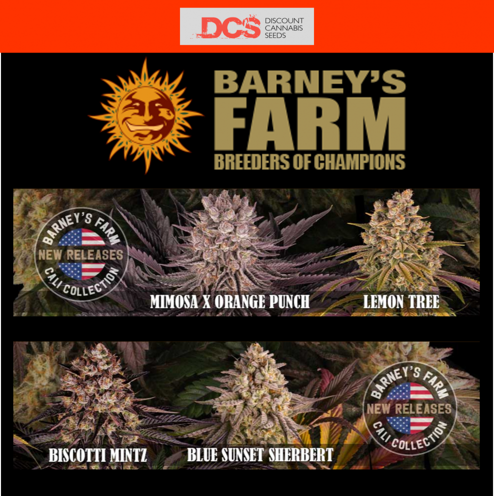 New Strains from Barney's Farm from Discount Cannabis Seeds