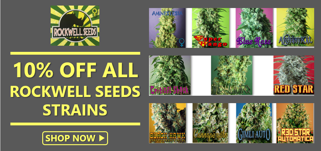 Rockwell Seeds Promotion - Discount Cannabis Seeds