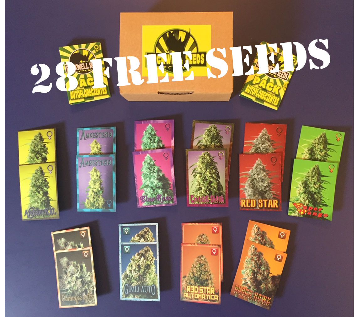 Rockwell Seed Competition - Discount Cannabis Seeds