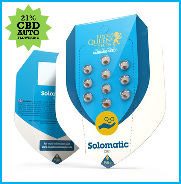 Solomatic CBD Auto Feminised Cannabis Seeds - Discount Cannabis Seeds