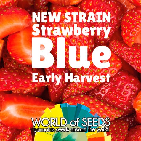 New Strains from World of Seeds - Discount Cannabis Seeds