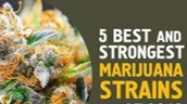 Strong Weed Strains - Discount Cannabis Seeds