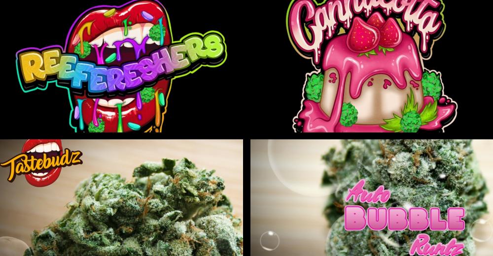New Cannabis Seeds Strains from Tastebudz