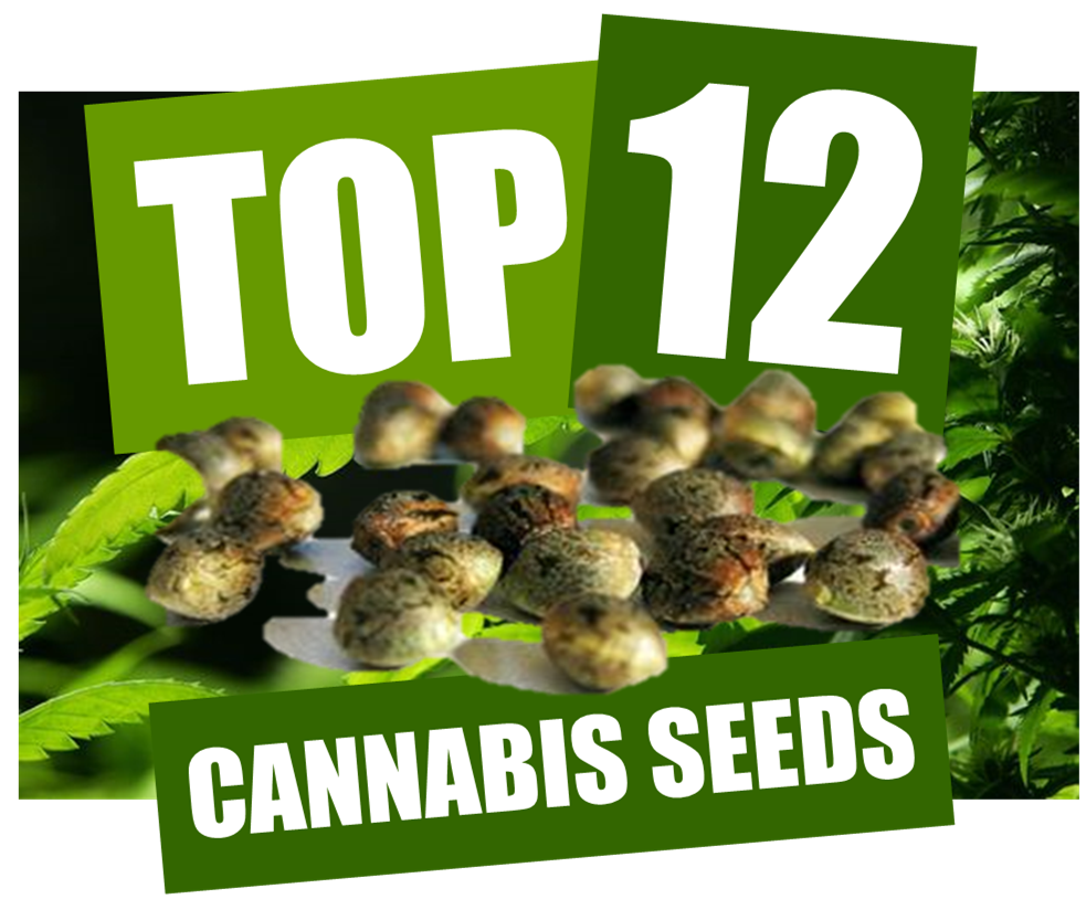 The Top 12 Cannabis Seed Recommendations from DCS