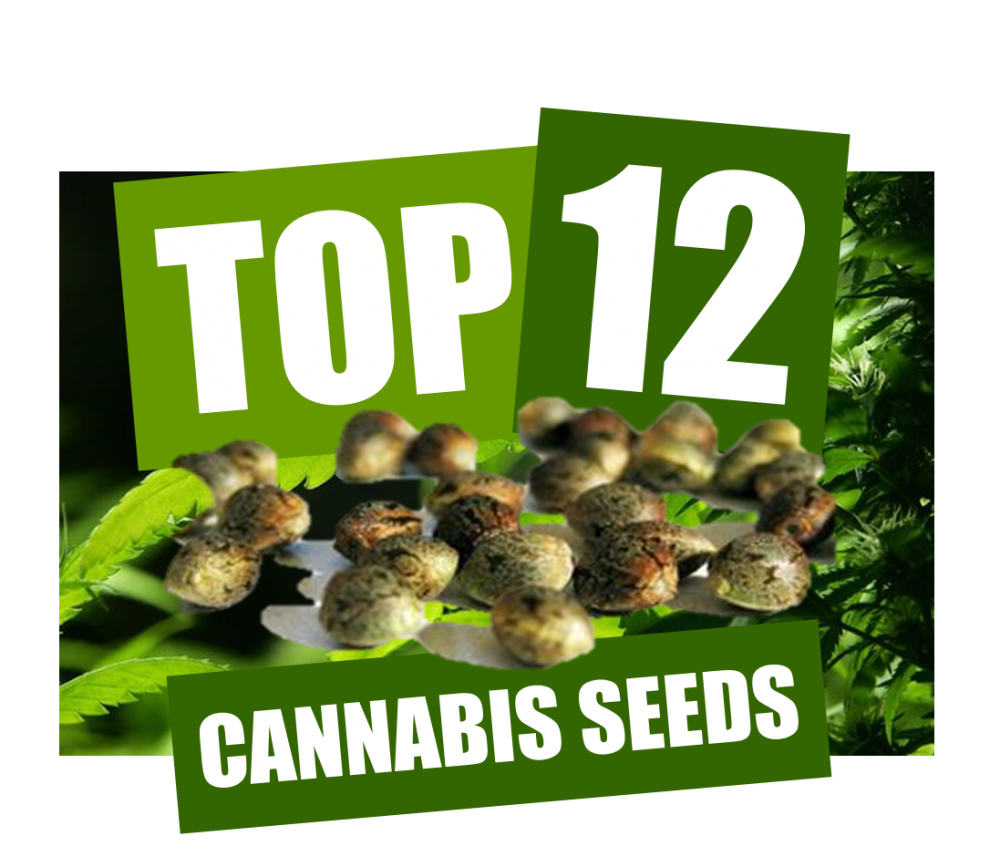 Top 12 Cannabis Seeds from Discount Cannabis Seeds