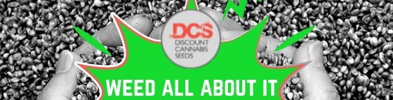 Weed all about it - Discount Cannabis Seeds