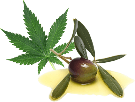 What does CBD Oil contain?