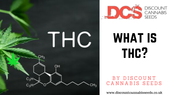 What is THC? - Discount Cannabis Seeds