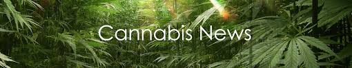 Positive News about Cannabis | Discount Cannabis Seeds