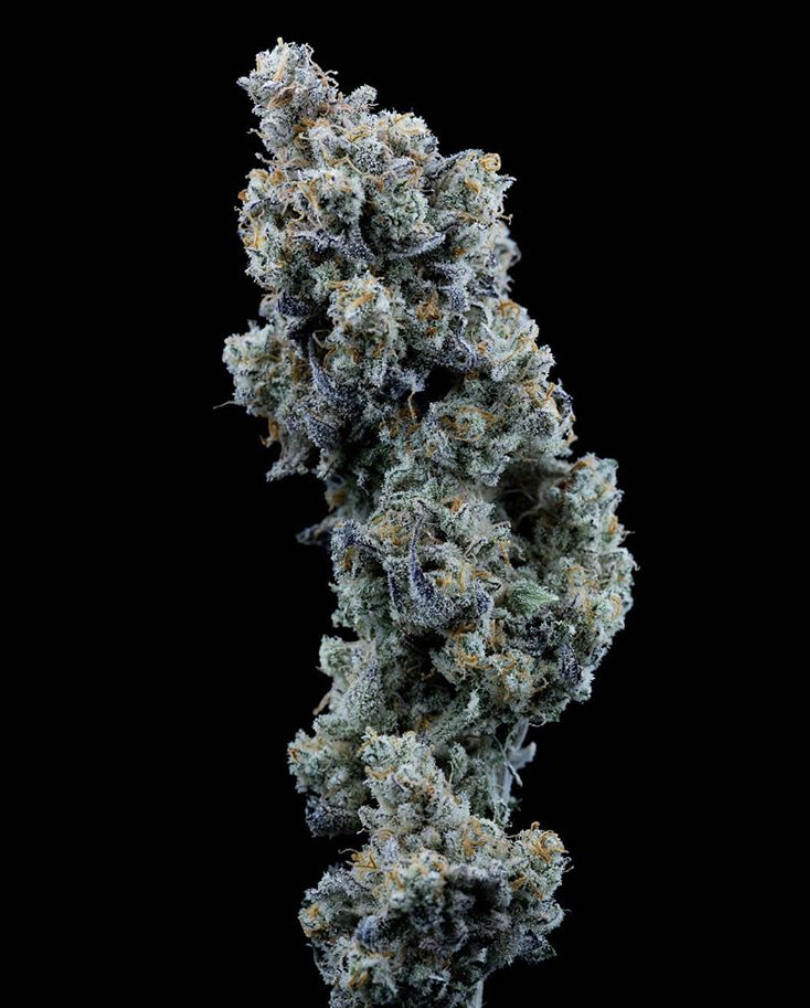 Bubba Kush.  Bubba Kush is an incredible Indica strain which is loved by all cannabis connoisseur  Whenever you just need to settle in and relax, a few puffs of Bubba Kush will have you well on your way to a quiet, content night in no time. Bubba Kush is such a great medicinal strain which is known for treating anxiety, depression and relieving pain due to its calming and relaxing properties.  We have many Bubba Kush strains for you to choose from at Discount Cannabis Seeds which you can find in this link > Bubba Kush. Bubba Kush by Dinafem Seeds.  Bubba Kush is an Indica-dominant clone of Pre ' 98 Bubba Kush and a very well-known American strain. Even the rappers from Cypress Hill love this brand of cannabis. The peak of popularity of Bubba Kush was in the 90s and the variety was expensive. This strain is strong and easy to grow, plant is small with compact buds covered in resin. Despite of short flowering cycle the strain has high-quality and big yields and does not demand much care.  So, it's easy for beginners and professionals. It grows well indoors with various cultivation methods and in small spaces. Bubba Kush has high, delightful taste and odor of earth, spices, coffee, diesel and citrus fruits. Reviews of Bubba Kush by Dinafem Seeds. Fantastic high. It's totally dreamy and euphoric. Really makes you appreciate the senses and the world we are in. I also love that plenty of clarity is maintained throughout the high. Extremely high quality - on taste, smell and potency. This plant yielded a bit less than the average strain, but it is capable of making chunkier buds in good conditions. Just go read the description from Dinafem, it is 100% accurate. Highly recommended strain... If you like a real and good tasting Kush just get these seeds and enjoy it.    Green Crack Feminised. Green Crack is a high THC Indica strain which has levels of THC OF 21%. Green Crack is a much-loved cannabis strain even by the famous Snoop Dogg who has his own cult following! Green Crack is famous for its amazing high but be careful a little goes a long way with this so if you are a newbie to cannabis its puff puff pass for you.  As Green Crack is a great seller at Discount Cannabis Seeds we sell lots of different Green Crack by different seed banks so here is the link to see many more, > Green Crack. Green Crack by Humboldt Seeds. Green Crack is a premium cannabis strain that based on the famous Afghani and Skunk genetics. This is a sativa dominant hybrid that contains 60% sativa and 40% Indica.  The strain demonstrates energetic growth and great stability. It develops a beautiful structure with a Christmas tree shape and big number of nuggets. The plant has a good resistance to mold and pests. It is excellent choice both for indoor and outdoor growing in a sunny, warm and Mediterranean climate. The flowering period takes 9-10 weeks. The smoke brings pleasant exotic, fruity and citrus flavors of mango, pineapple, cedar and incense and potent cerebral effects with enjoyable feeling of euphoria. Green Crack will be ideal choice for Skunk fans. Here are some great reviews of Green Crack.  These genetics are insane! She Loved every second of her training and defoliating! Never got stunted no matter what I did to her! Super crop, lollipop, hst, mass defoliating.... u name it I did it to her and she thrived through it! Her smell is just the most intense aroma u can imagine! No carbon filter is going to eliminate her wonderful stank! Buds are all tight and dense right down to her bottom nug. Trichomes are there and in the plenty! Some real frosty flowers! Resinous rocks are how I would describe her fruit. Will be growing it again VERY SOON! Smell/quality is your typical green crack, although this was coming out extremely frosty (even for GC). High is also what you would expect, good mood, focused, energized - awesome strain for day medication.     I hope you all enjoyed my blog on Feminised cannabis seeds, and you can head over and enjoy shopping for your Feminised seeds.