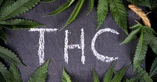 Buy Cannabis Seeds at Discount Cannabis Seeds