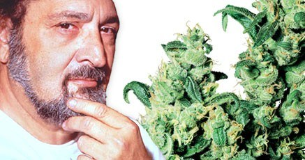 Sensi Seeds - Discount Cannabis Seeds