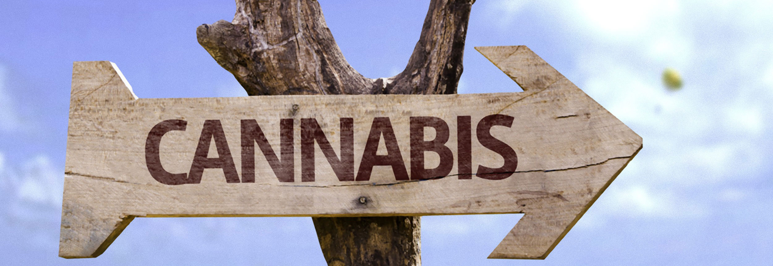 Buy Discount Cannabis Seeds online - Buy the Best Weed online in the UK - Cheap Cannabis Seeds - Free Seeds with every order