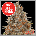 Auto Blackberry Gum Feminised Cannabis Seeds | Discount Cannabis Seeds