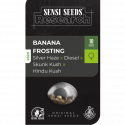 Banana Frosting Feminised Cannabis Seeds - Sensi Seeds Research