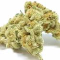 Charlotte's Web Feminised Cannabis Seeds   Dispensario Seeds