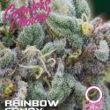 Rainbow Candy Auto Feminised Cannabis Seeds - Growers Choice